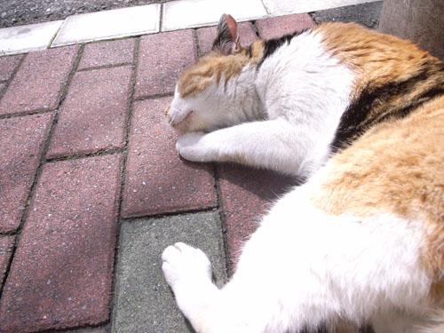 cat summer2