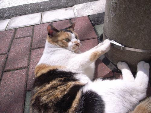 cat summer1