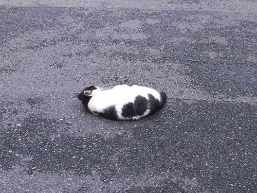 cat09046