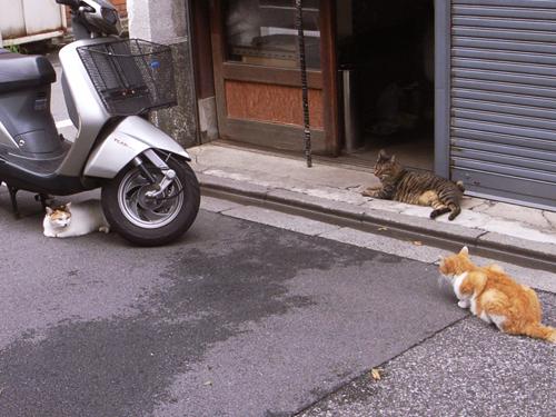 cat09043
