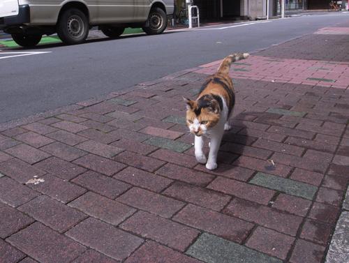 cat09044