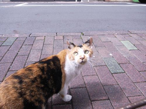 cat09045